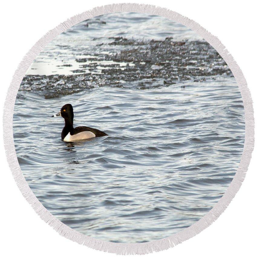 Duck Round Beach Towel featuring the photograph Solo Duck by Linda Kerkau