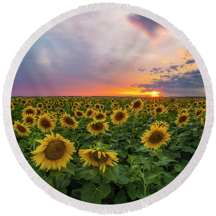 Sunflowers Round Beach Towel featuring the photograph Somewhere Sunny by Aaron J Groen
