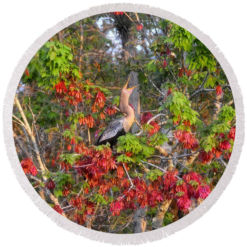 Anhinga Round Beach Towel featuring the photograph Song Of The Anhinga by David Lee Thompson