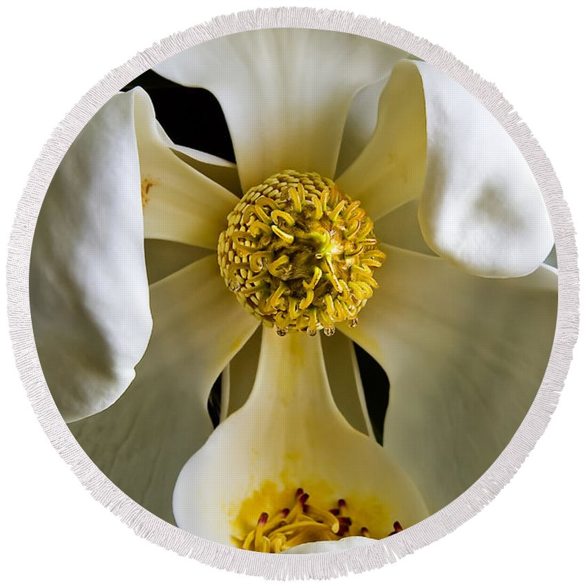 Magnolia Round Beach Towel featuring the photograph Southern Magnolia by Joan McCool