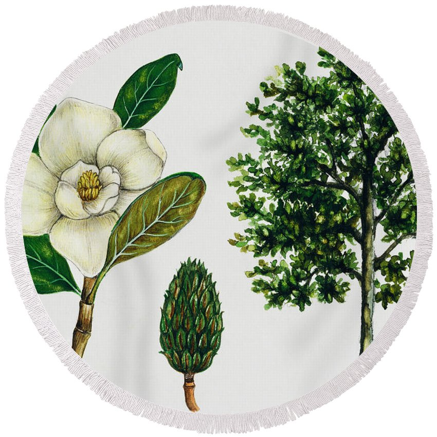 Magnolia Round Beach Towel featuring the painting Southern Magnolia Or Bull Bay by Unknown
