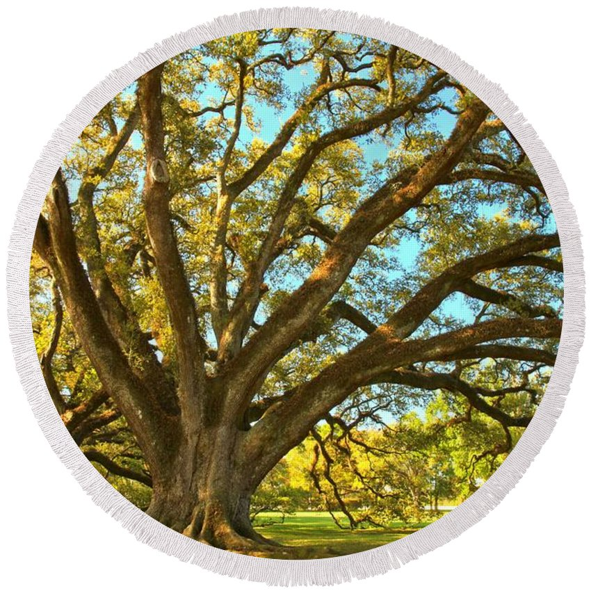 Tunnel Of Oak Trees Round Beach Towel featuring the photograph Southern Plantation Oak Trees by Adam Jewell