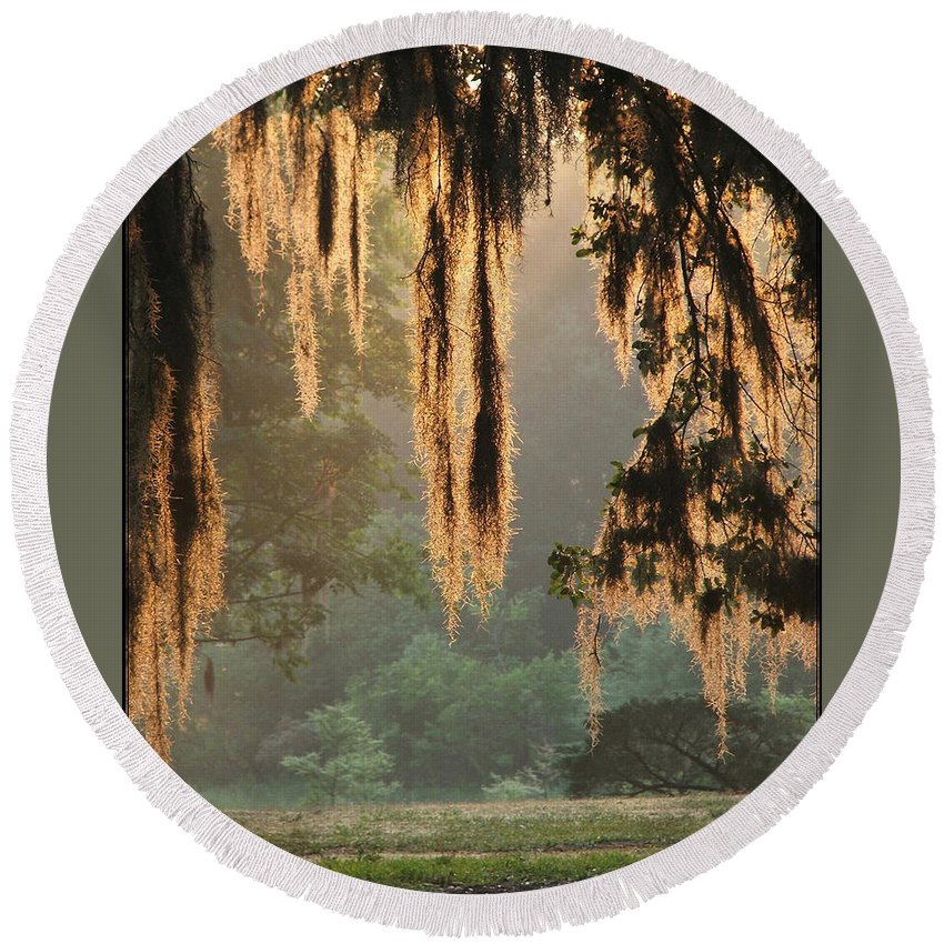 Spanish Moss Round Beach Towel featuring the photograph Spanish Moss In The Morning by Robert Meanor