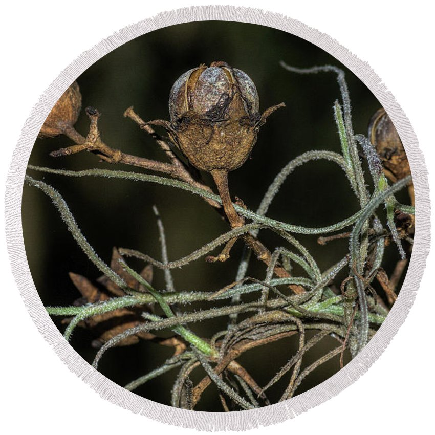 Nature Round Beach Towel featuring the photograph Spanish Moss On Azalea by Richard Rizzo