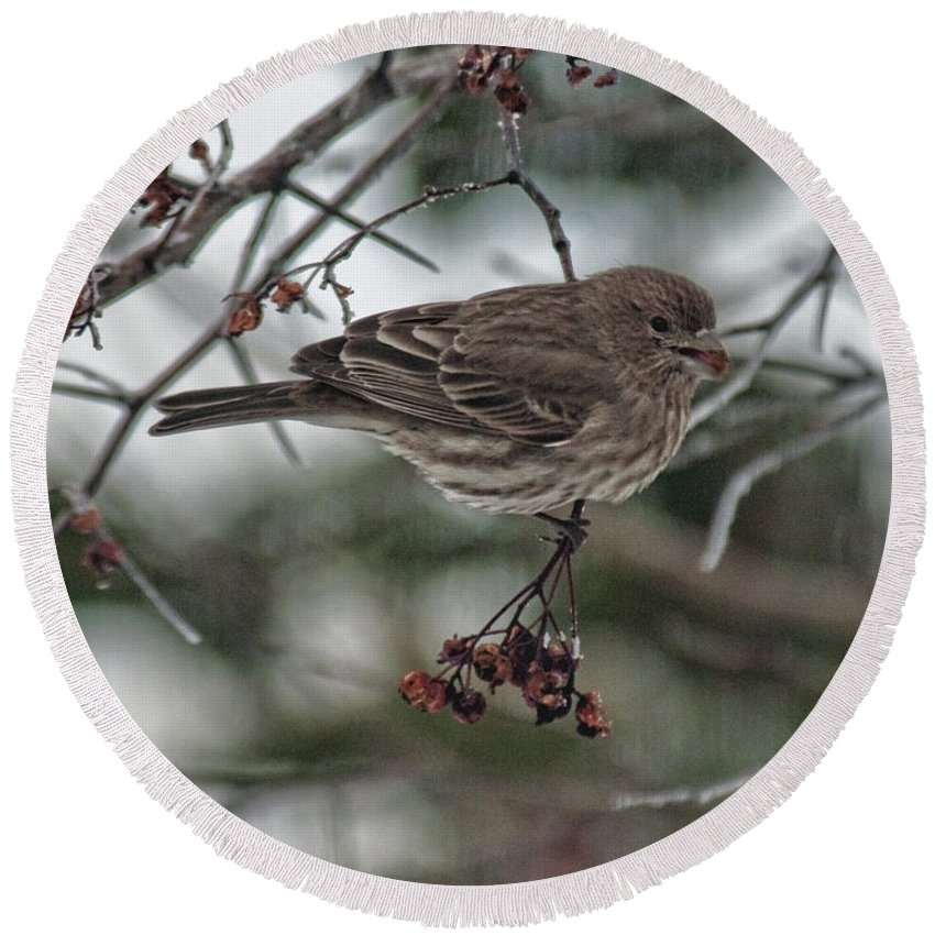 Bird Round Beach Towel featuring the photograph Sparrow With Berry by David Arment