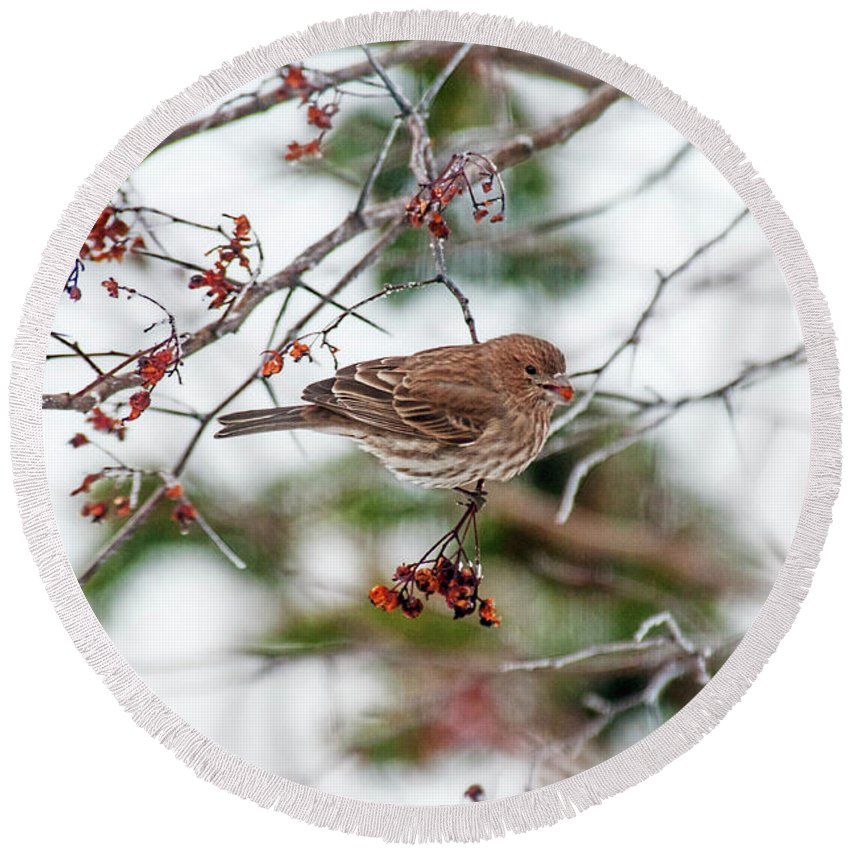 Sparrow Round Beach Towel featuring the photograph Sparrow With Seed by David Arment