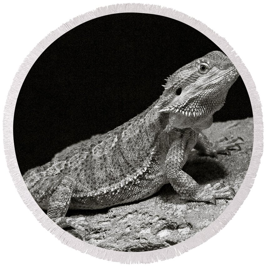 Speckled Round Beach Towel featuring the photograph Speckled Iguana Lizard by Marilyn Hunt
