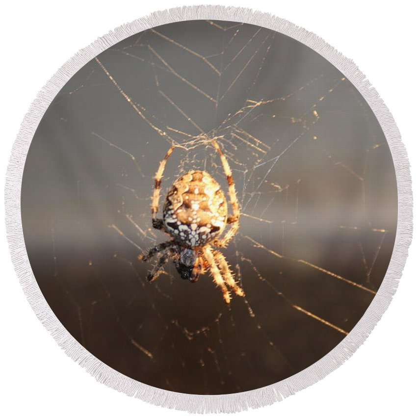 Spider Round Beach Towel featuring the photograph Spider In Wait by Cliff Ball