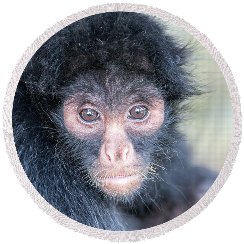 Spider Round Beach Towel featuring the photograph Spider Monkey Face by Jess Kraft