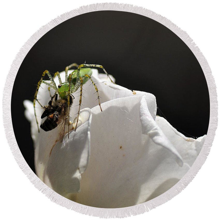 Clay Round Beach Towel featuring the photograph Spider Vs Bee On Rose by Clayton Bruster