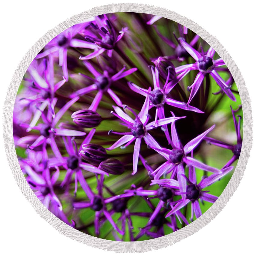 Allium Round Beach Towel featuring the photograph Spiky by Geoffrey Moore