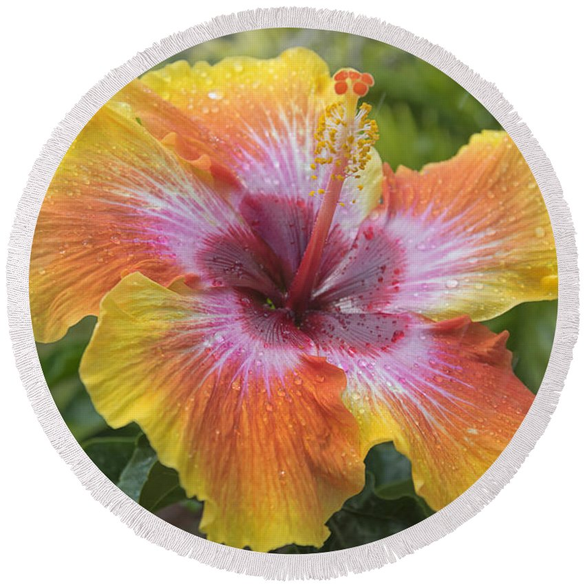 Hibiscus Round Beach Towel featuring the photograph Spin The Bottle Hibiscus by Louise Hill