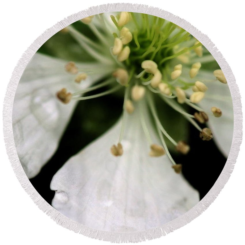 Flower Round Beach Towel featuring the photograph Spindly Stamen by Angela Rath