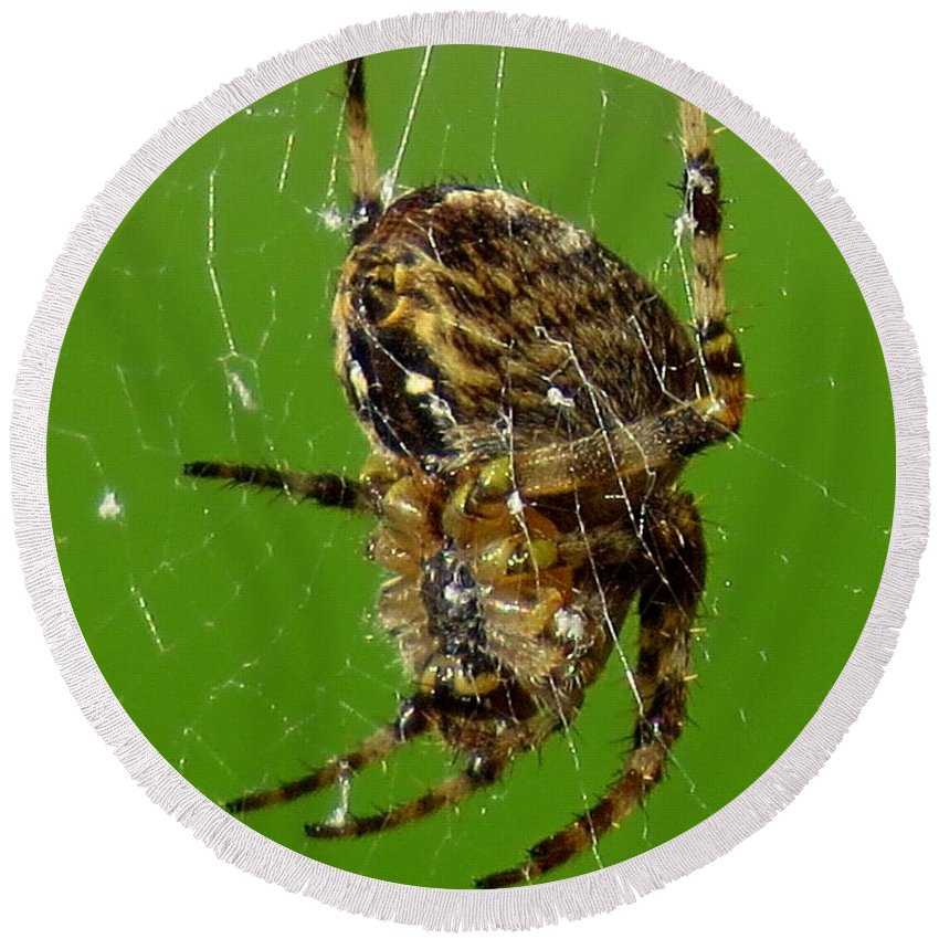 Spider Round Beach Towel featuring the photograph Spinning A Web by John Topman