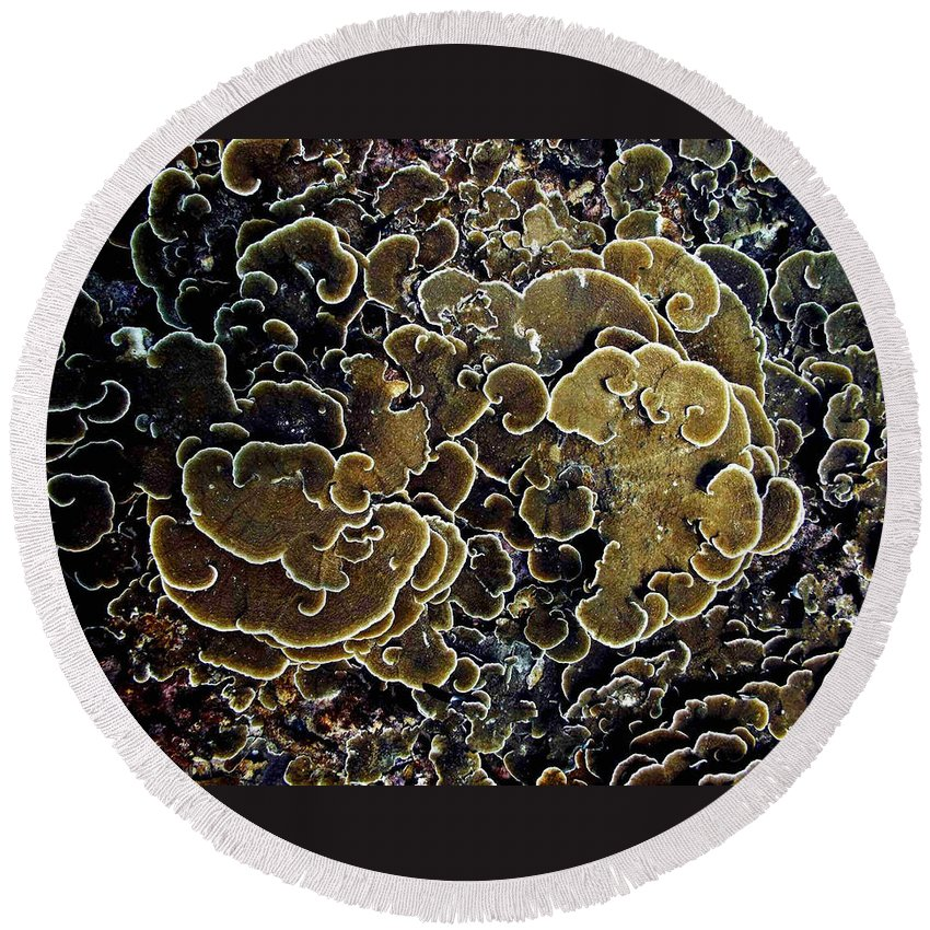 Corals Round Beach Towel featuring the photograph Spirals In Corals by Dragica Micki Fortuna