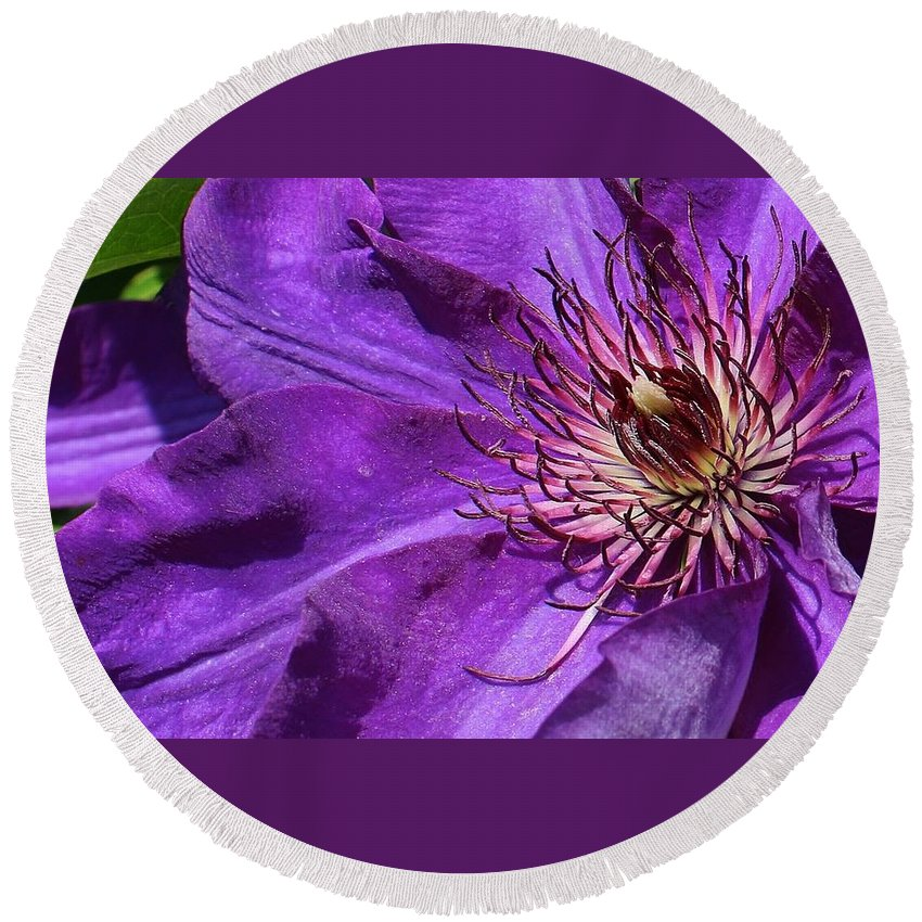 Flora Round Beach Towel featuring the photograph Splash Of Purple by Bruce Bley