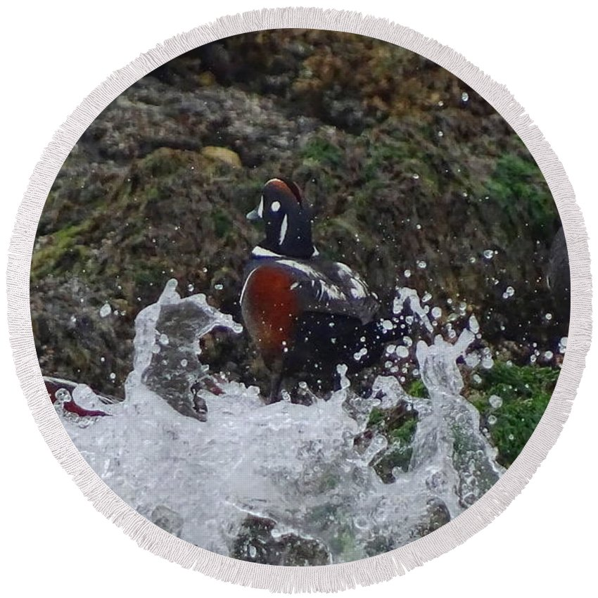 Harlequin Ducks Round Beach Towel featuring the photograph Splashed At Haystack Rock by Amelia Emery