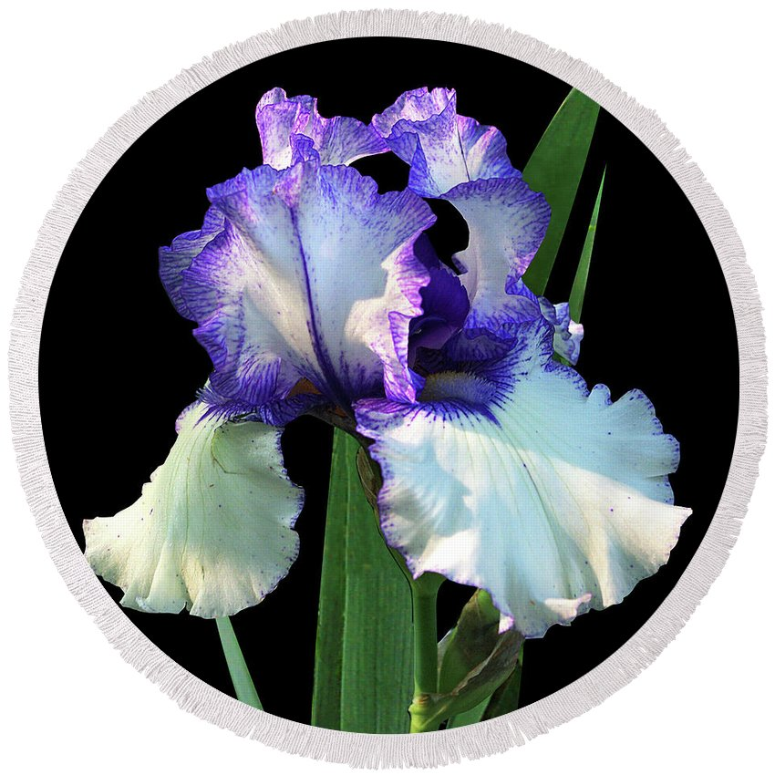 Iris Round Beach Towel featuring the photograph Spotlight On 'freedom Song' Bearded Iris by R V James