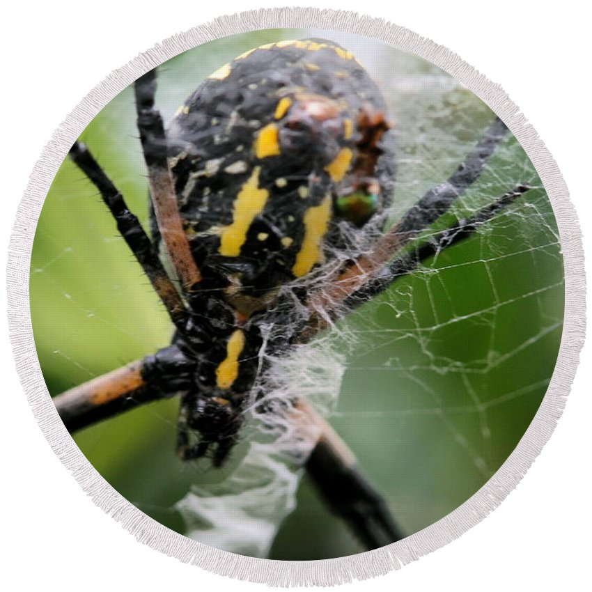 Argiope Round Beach Towel featuring the photograph Sprawled by Angela Rath