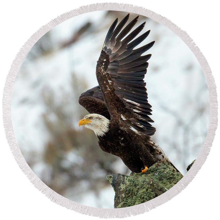 Bald Eagle Round Beach Towel featuring the photograph Spread The Wings by Mike Dawson