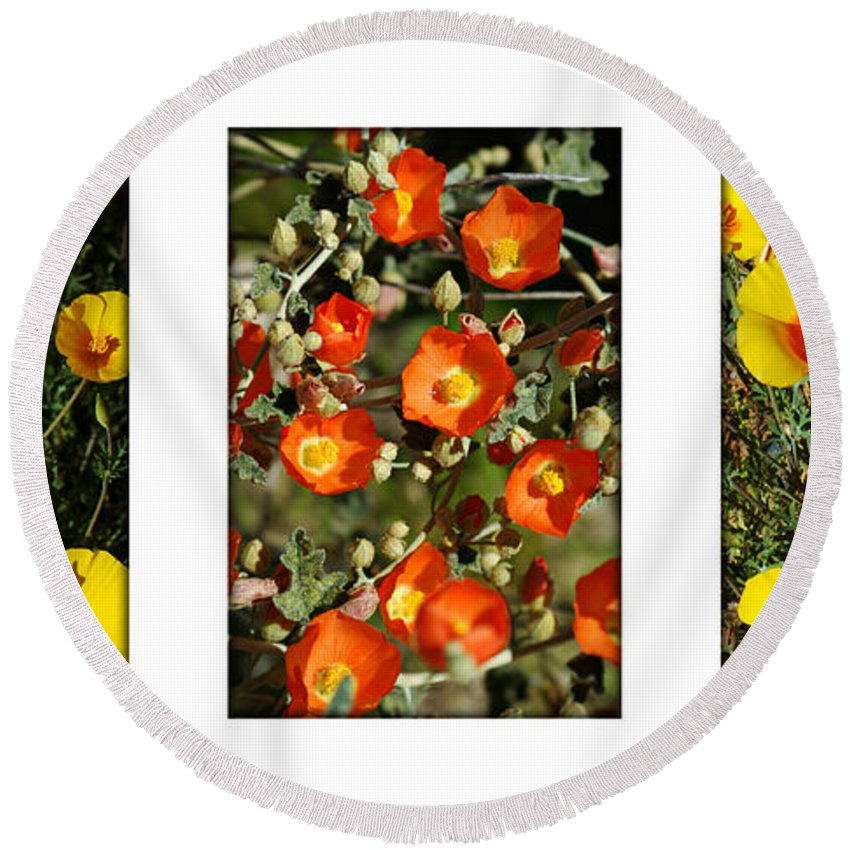 Arizona Round Beach Towel featuring the photograph Spring - Desert Style 2 by Jill Reger