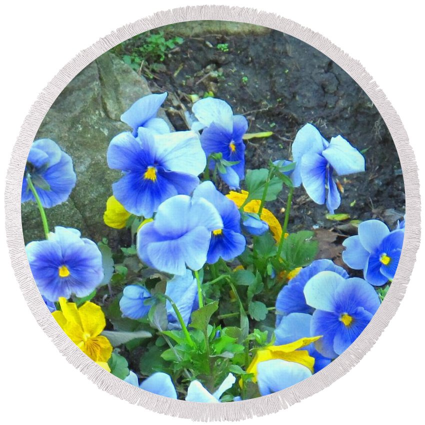 Blue Round Beach Towel featuring the photograph Spring Beauties by Ian MacDonald