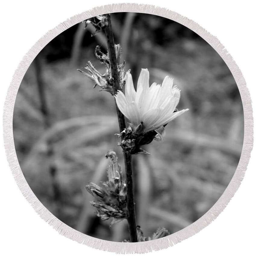 Nature Round Beach Towel featuring the photograph Monochrome Flower Series - Spring Bloom by Arlane Crump