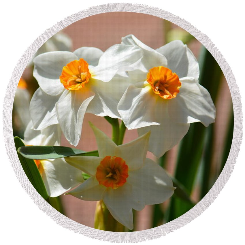 Spring Daffodils Round Beach Towel featuring the photograph Spring Daffodils by Maria Urso