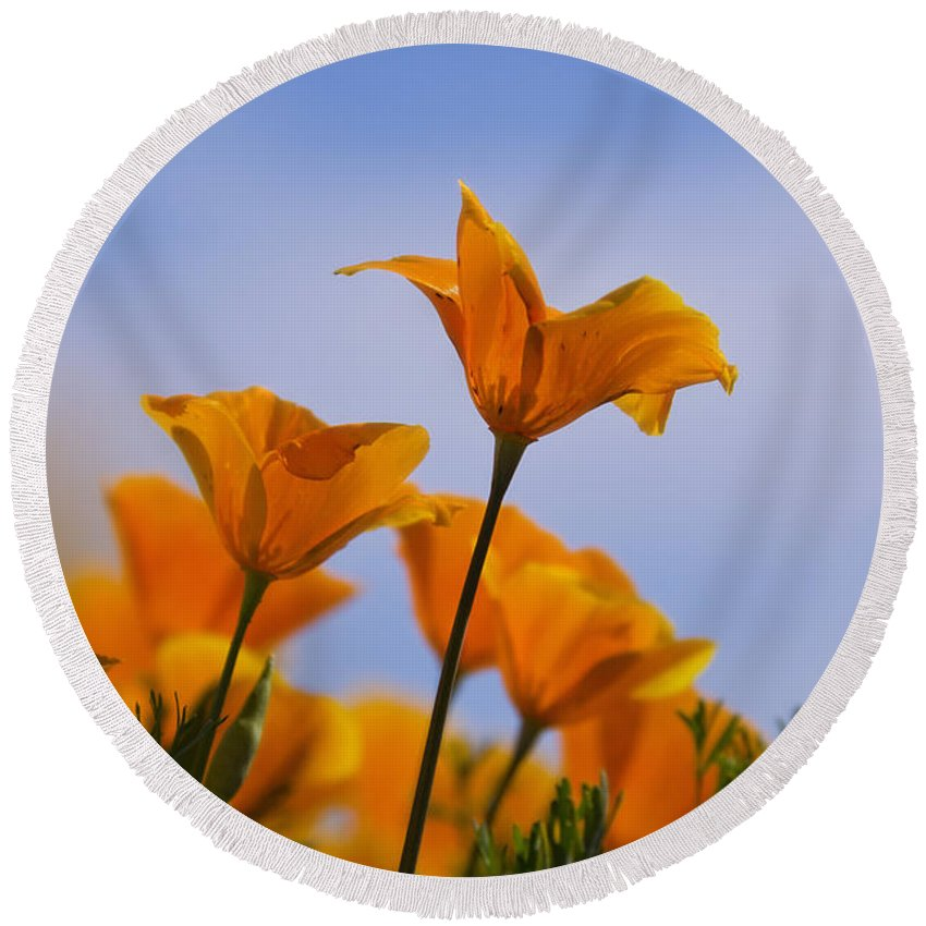 Poppies Round Beach Towel featuring the photograph Spring Is A Poppin' by Saija Lehtonen