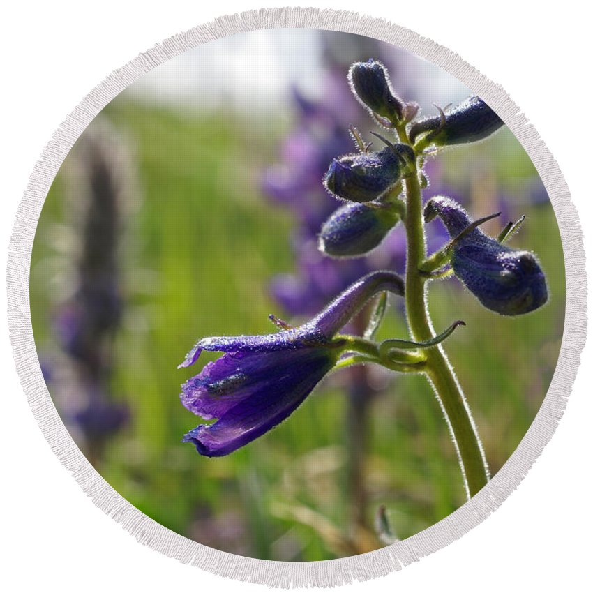 Larkspur Round Beach Towel featuring the photograph Spring Larkspur by Heather Coen