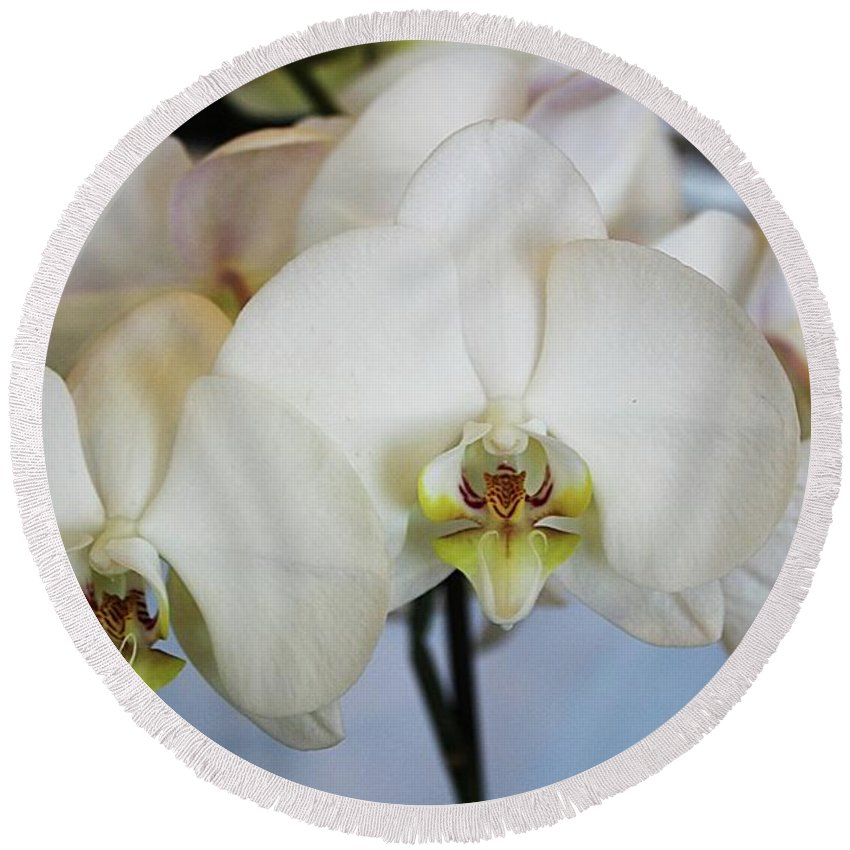 Orchids Round Beach Towel featuring the photograph Spring Orchids by Monnie Ryan