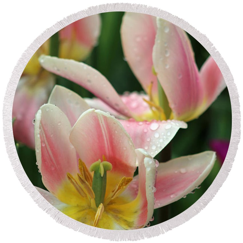 Tulip Round Beach Towel featuring the photograph Spring Tulips 152 by Pamela Critchlow