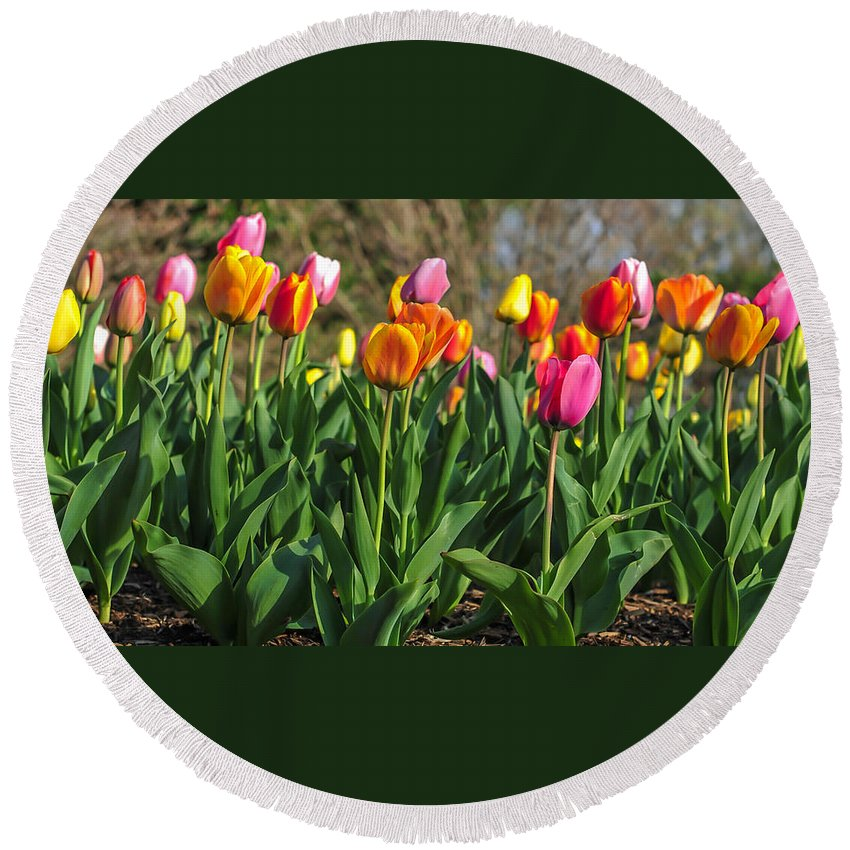 Terry Deluco Round Beach Towel featuring the photograph Spring Tulips by Terry DeLuco