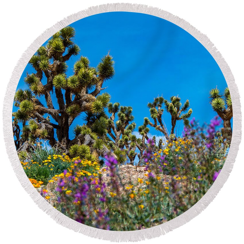Joshua Trees Round Beach Towel featuring the photograph Springtime At The Canyon by Stephen Whalen