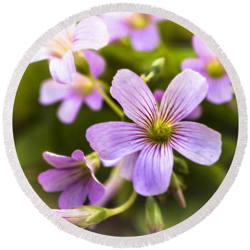 Pretty Round Beach Towel featuring the photograph Springtime Blooms Violet Wood Sorrel 3 by Debra Forand