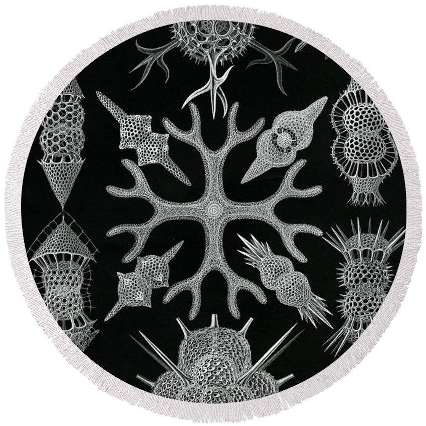 Designs Similar to Spumellaria by Ernst Haeckel