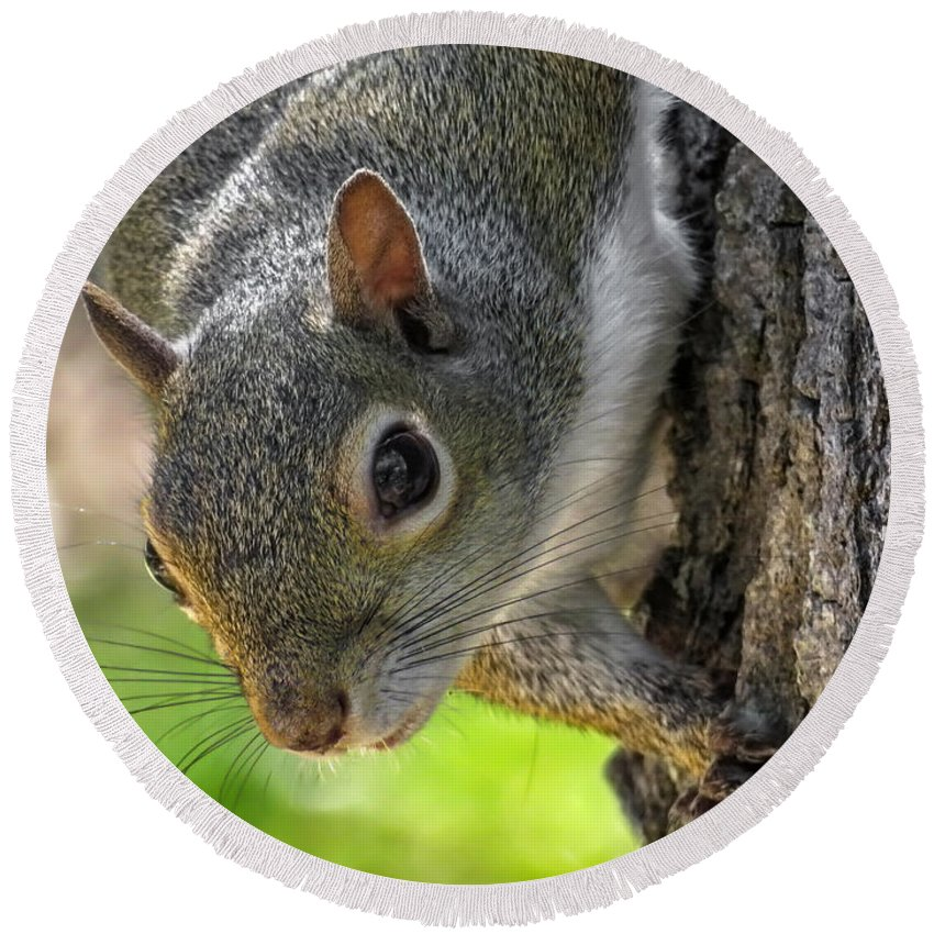Squirrel Round Beach Towel featuring the photograph Squirrel 4 by Kristopher Bedgood