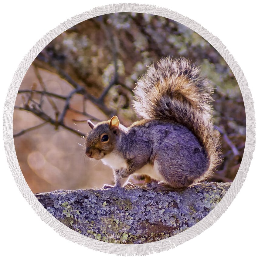 Gray Round Beach Towel featuring the photograph Squirrel by Joe Geraci