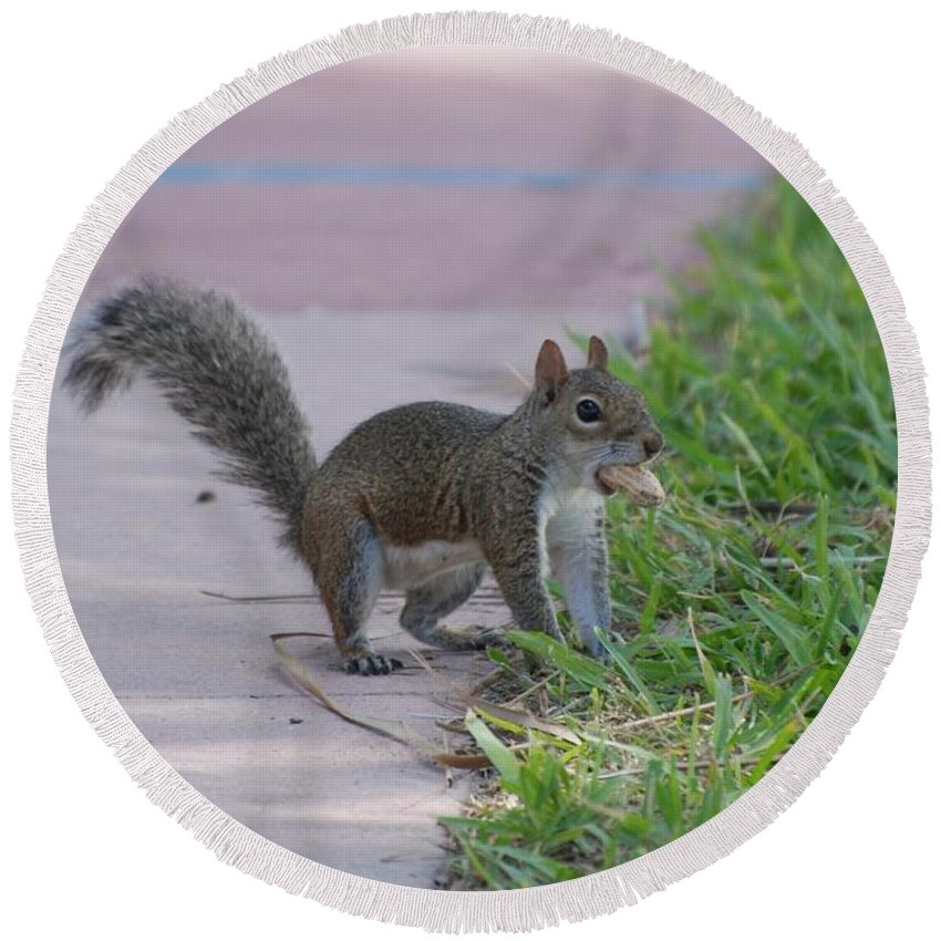 Squirrels Round Beach Towel featuring the photograph Squirrel Nuts by Rob Hans