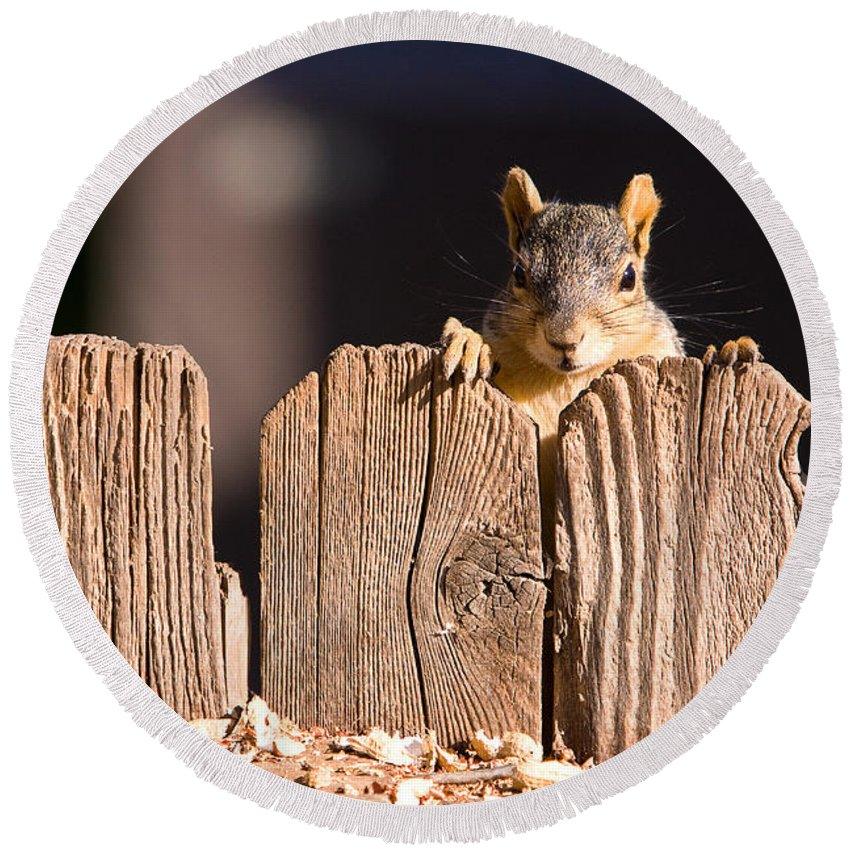 Squirrel Round Beach Towel featuring the photograph Squirrel On The Fence by James BO Insogna
