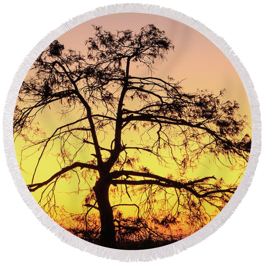 Florida Round Beach Towel featuring the photograph St Johns River Tree by Stefan Mazzola