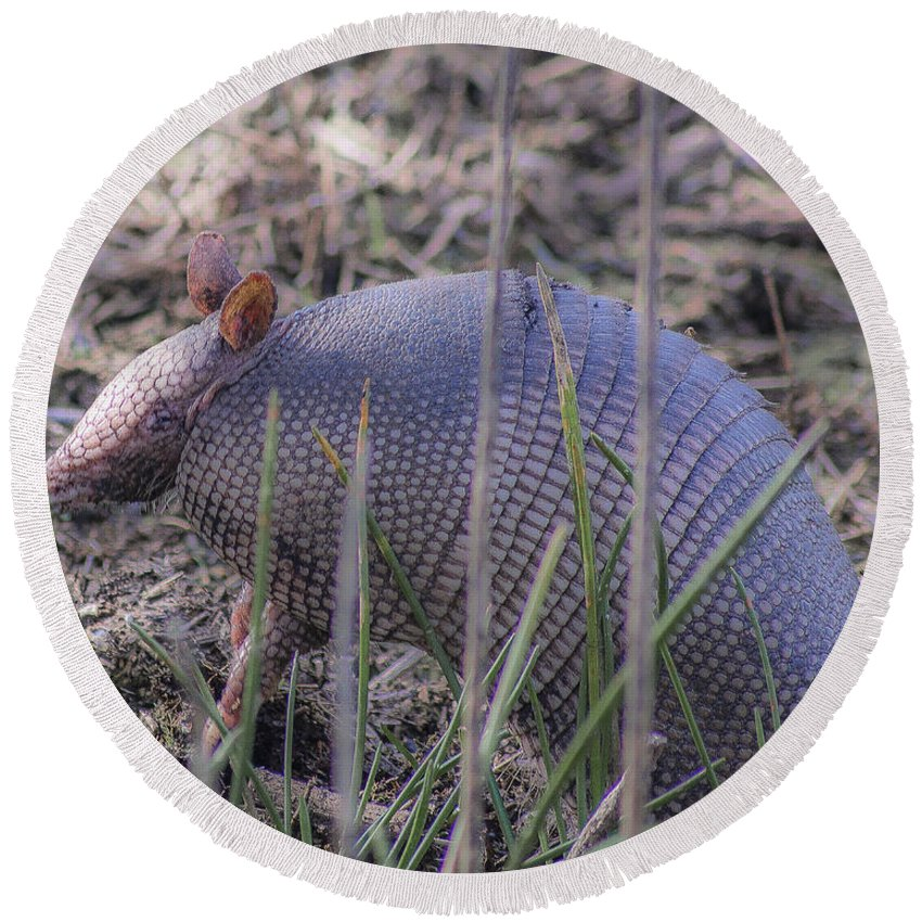 Standing Armadillo Round Beach Towel featuring the photograph Standing Armadillo by Michael Frizzell