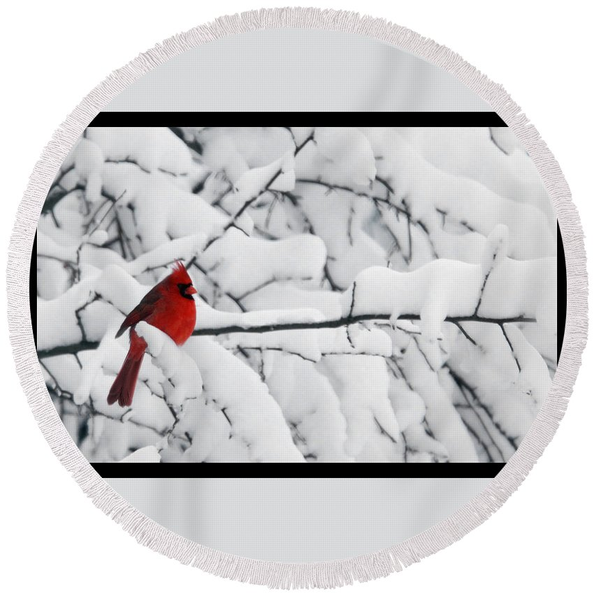 Photography Photographer Cardinal Red Bird Snow Season White Winter Scene Round Beach Towel featuring the photograph Standing Out by Shari Jardina