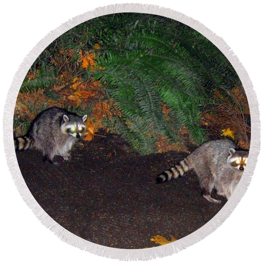 Raccoons Round Beach Towel featuring the photograph Stanley Park Rascals by Will Borden