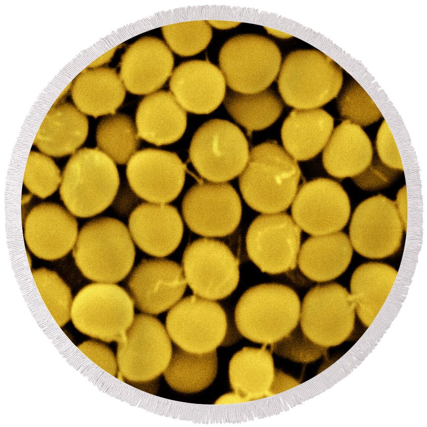 Staphylococcus Capitis Round Beach Towel featuring the photograph Staphylococcus Capitis Bacteria, Sem by Scimat