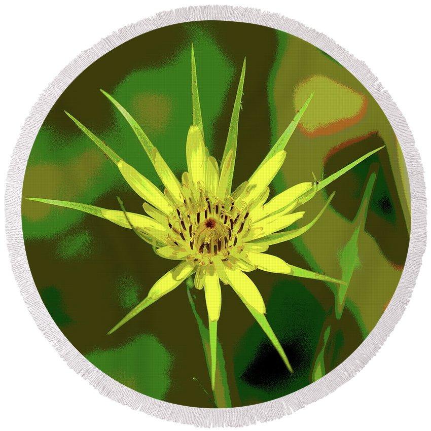 Nature Round Beach Towel featuring the photograph Star Flower by Ben Upham III