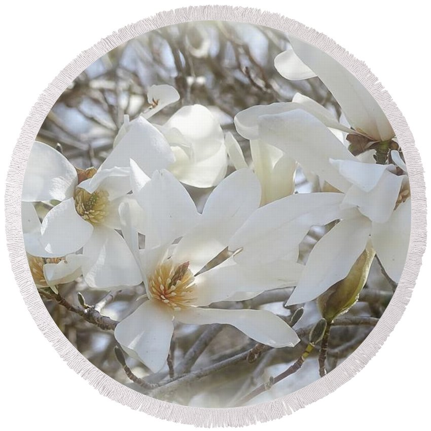 Star Magnolia Round Beach Towel featuring the photograph Star Magnolia Blossoms by Sandy Keeton