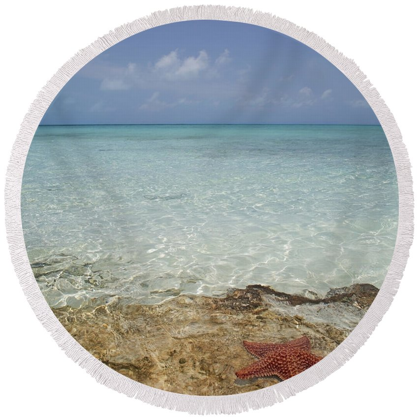Starfish Round Beach Towel featuring the photograph Star Paradise by Betsy Knapp