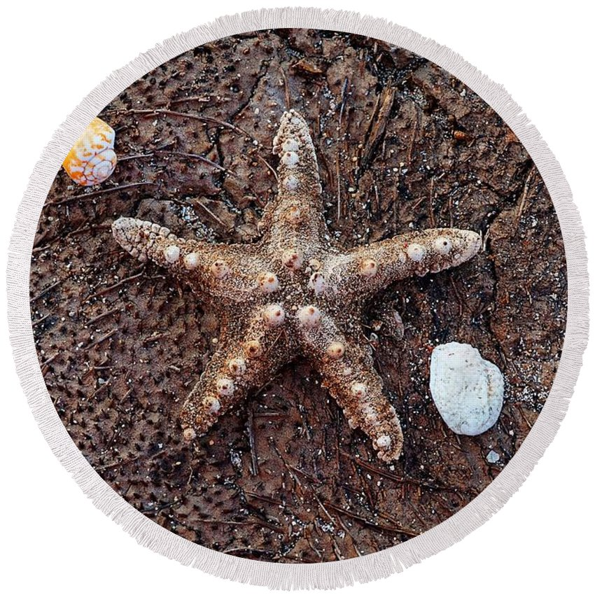 Beach Round Beach Towel featuring the photograph Starfish And Seashells by Christopher Shellhammer