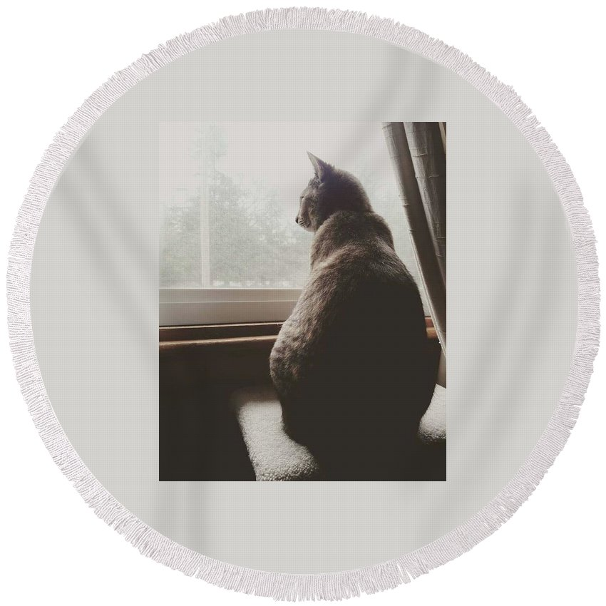Cat Round Beach Towel featuring the photograph Staring Outside by Shawna Walker